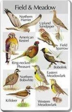 Birds of the Field and Meadow SongCard - For Classic IdentiFlyer and Singing AlarmClock