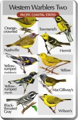 Western Warblers Two SongCard - For Classic IdentiFlyer