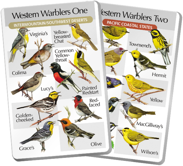 Western Warblers One & Two