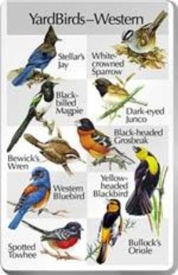 IdentiFlyer For the Birds SongCard ~ Western Warblers One ~ Song Card SCW2
