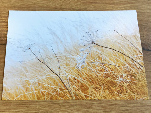 Postkarte art+nature Mit dem Wind