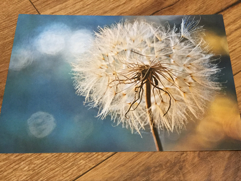 Postkarte art+nature Pusteblume - Polly Paper
