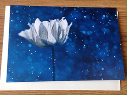 Klappkarte art+nature Magic Blue - Polly Paper