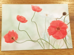 Postkarte art+nature Islandmohn pink