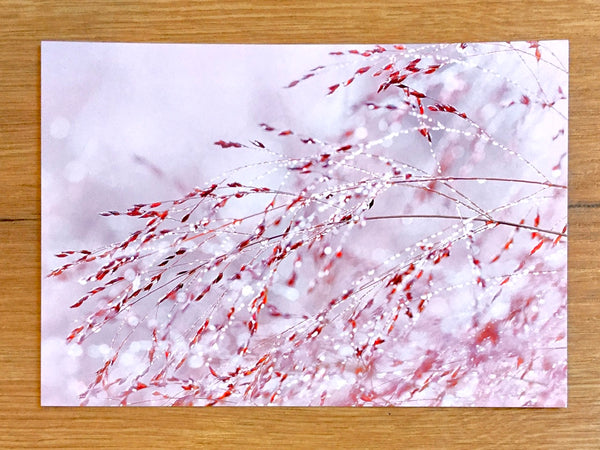 Postkarte art+nature Gräser