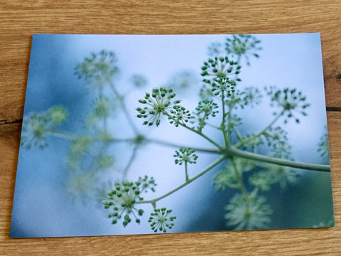 Postkarte art+nature Into the light