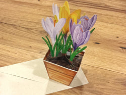 3D-Karte Pop-Up-Karte Blumen°
