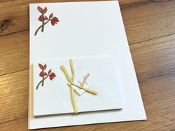 Briefpapier Amaryllis 12er-Set
