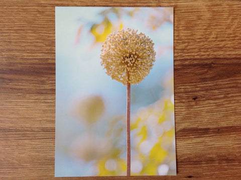 Postkarte art+nature Knoblauchblüte - Polly Paper