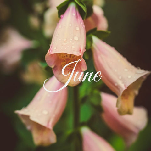 Flowers available in June