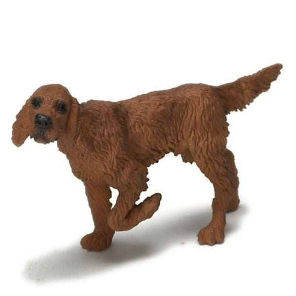 A miniature Irish Setter dog.
