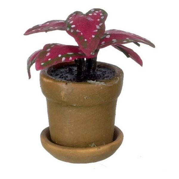A dollhouse miniature red caladium in a pot.