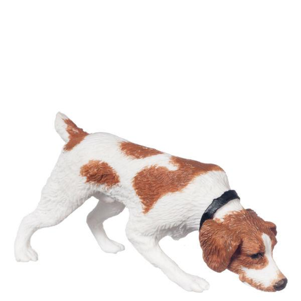 A miniature Jack Russell terrier dog.