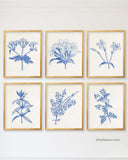 Blue Botanical Prints, Set of 6-Alex Isaacs Designs