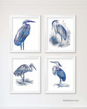 Great Blue Heron Art Prints, Set of 4
