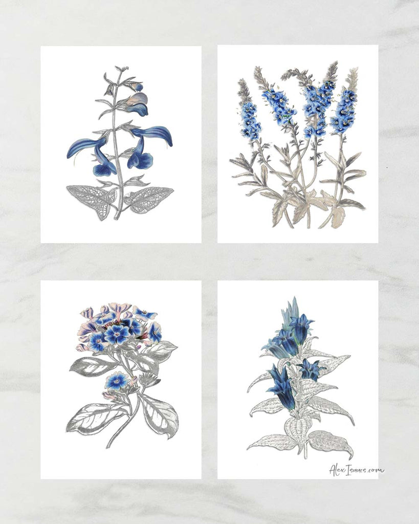 Blue Botanical Pencil Sketch Prints, Set of 4-Prints-Alex Isaacs Designs