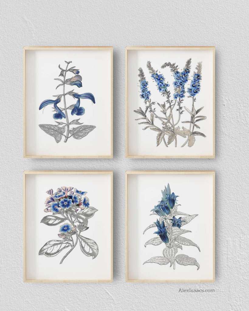 Vintage Blue Botanical Pencil Sketch Prints Alex Isaacs Designs