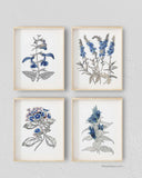Vintage Blue Botanicals Pencil Sketch Prints, Set of 4