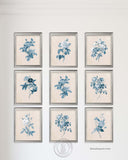 Blue Rose Botanical Prints, Set of 9