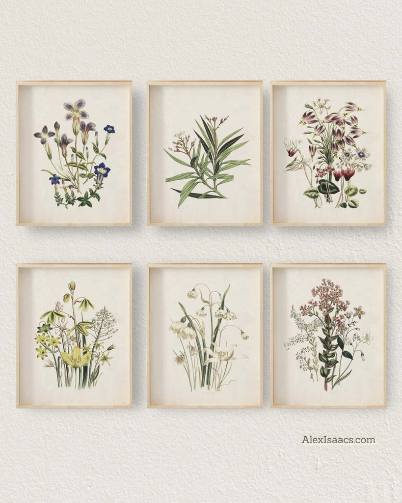 Multi Colored Vintage Botanical Prints, Set of 6-Prints-Alex Isaacs Designs
