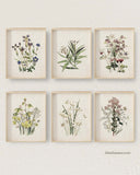 Vintage Wildflower Prints, Set of 6