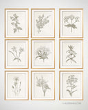 Vintage Botanical Prints, Set of 9