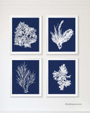 Navy Coral Prints, set of 4