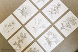 Antique Botanical Prints, Set of 9-Alex Isaacs Designs