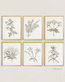Sepia Vintage Botanical Prints, Set of 6 Prints