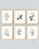 Minimalist botanical wall art, Set of 6