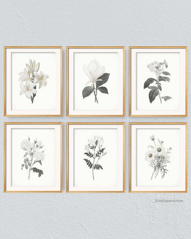 Pencil Sketch White on White, Set of 6-Prints-Alex Isaacs Designs