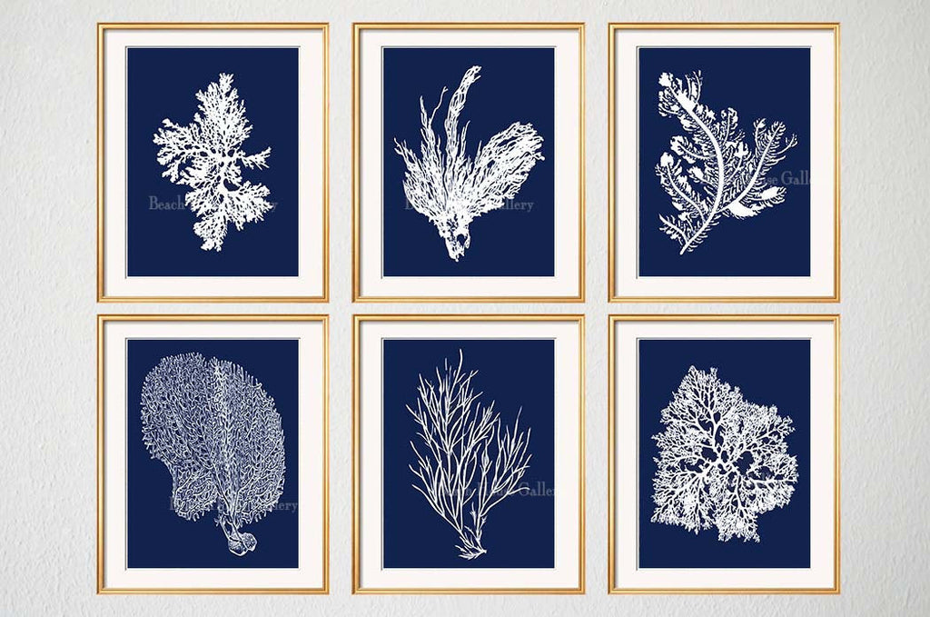 Navy Blue Coral Prints, Set of 6-Alex Isaacs Designs