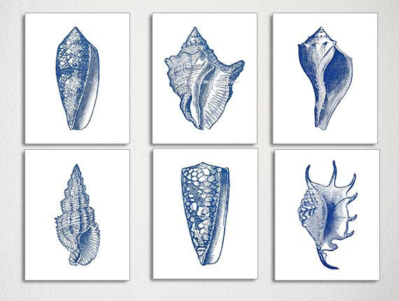 Seashell Prints, Set of 6, Dark Blue Art Prints, Blue Seashell Illustration, Bathroom Art, Beach House Decor, Blue White Prints, Nautical-Alex Isaacs Designs