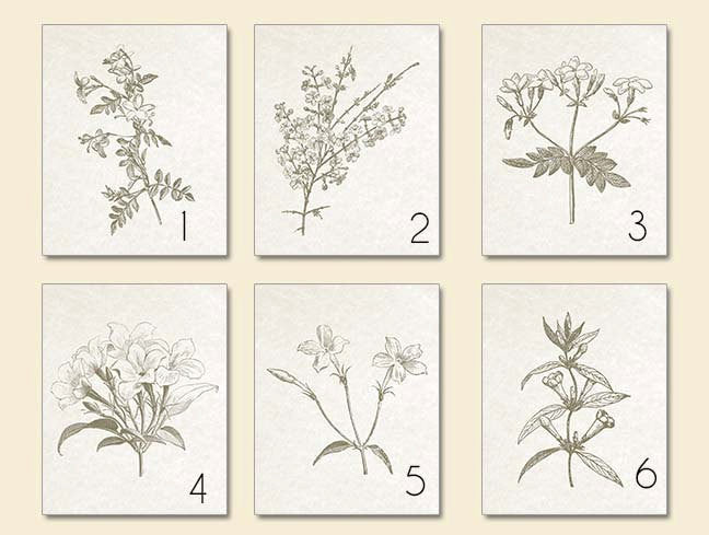 Sepia Brown Botanical Prints, Set of 6 Prints-Alex Isaacs Designs