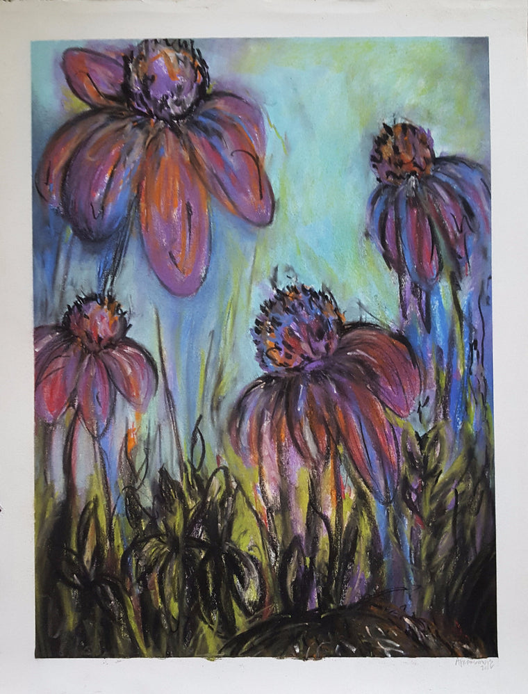 cone flowers in color