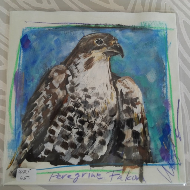 Peregrine Falcon on Paper, Original Painting