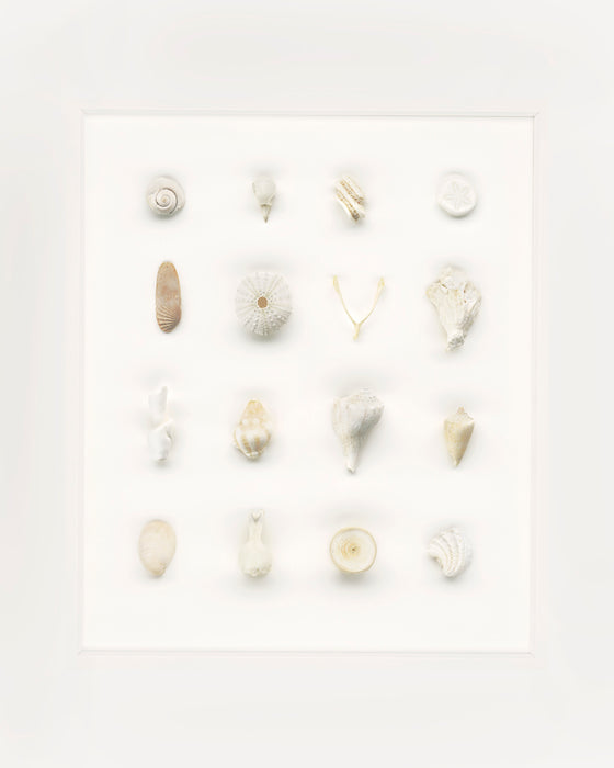 """White on White with Wish Bone"" by Barbara McDowell"