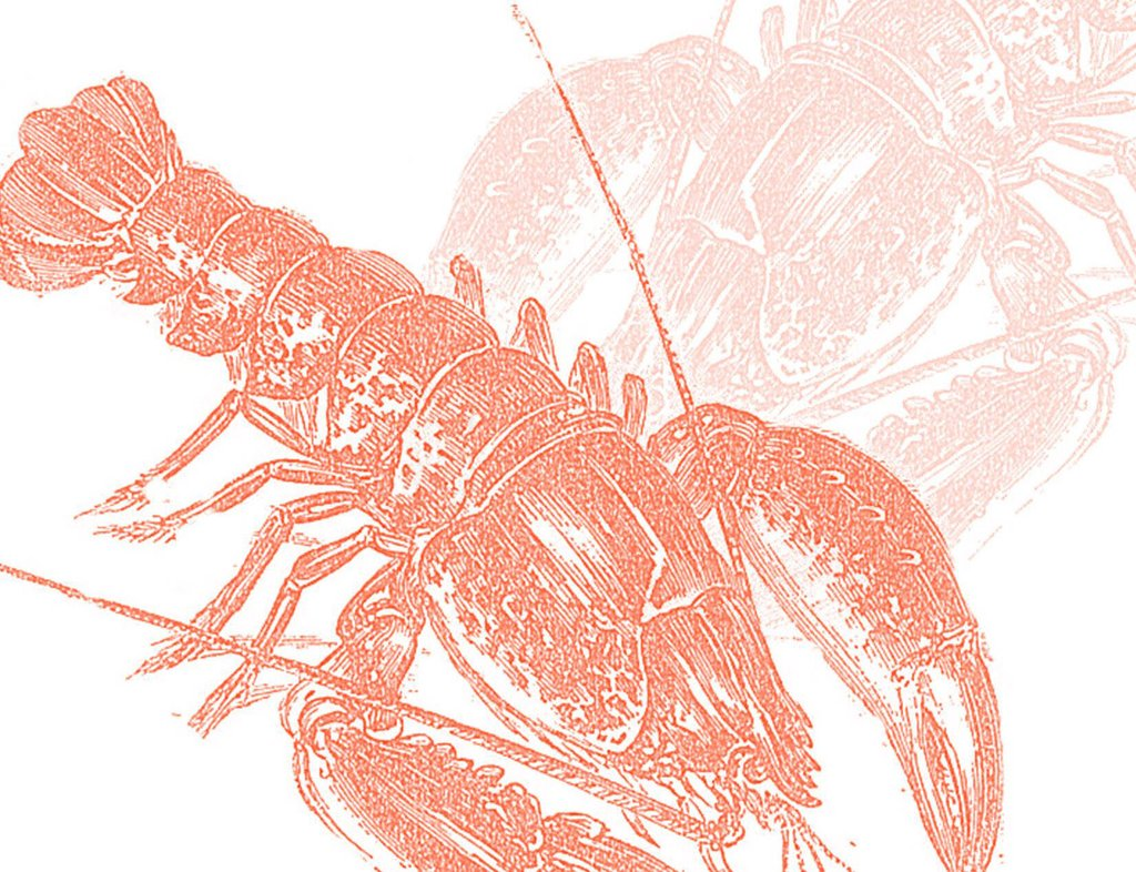 Boxed Note Cards, Lobster