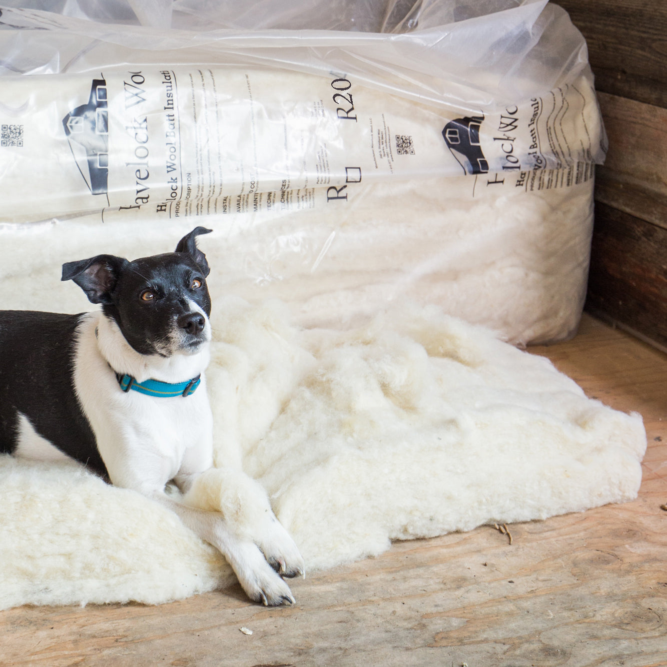 Havelock Wool insulation is safe for people and for pets.