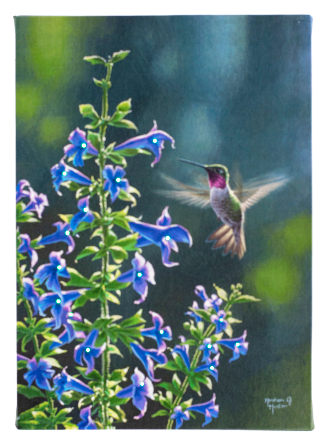 Blue Flower Hummingbird Lighted Print