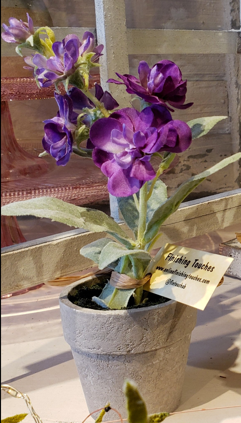 Potted Delphiniums - 3 Styles