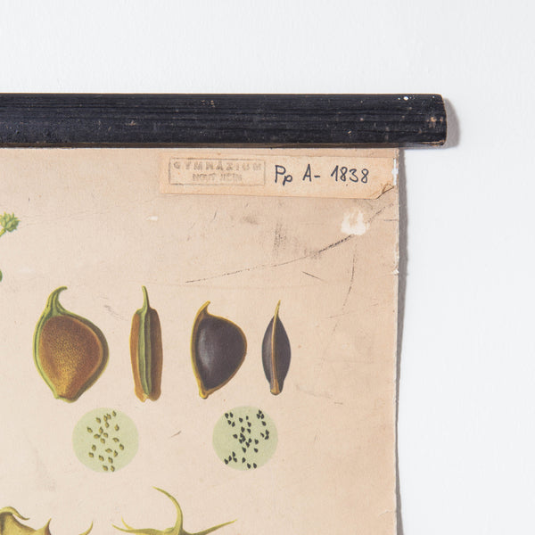 Vintage Botanical Art Prints