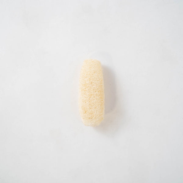 Dried Natural Sponge (bundle of 7)