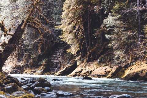 Best Places to Go Fly Fishing in the Spring