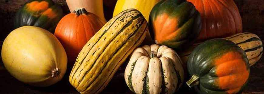 The 3 Essential Steps for Storing Winter Squash
