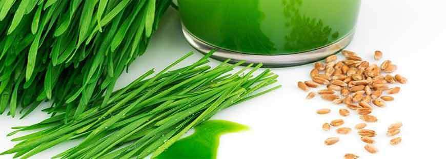 40 Benefits of Wheat Grass Juice - Nutritional Facts