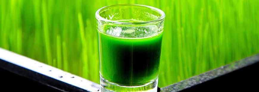 Benefits of Wheatgrass and the Juicing Diet