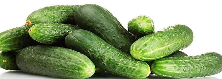 About Cucumbers