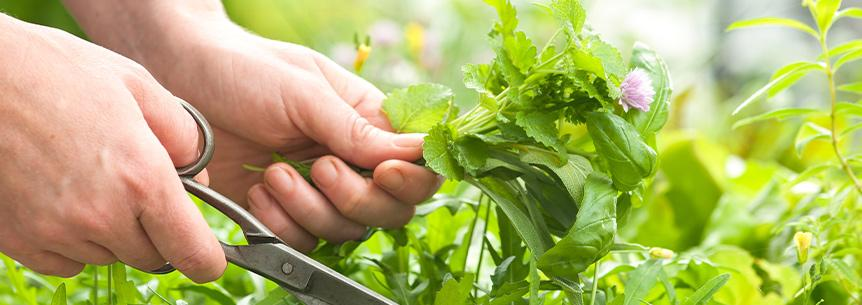 How to Plant Your Own Herb Garden from Seed!