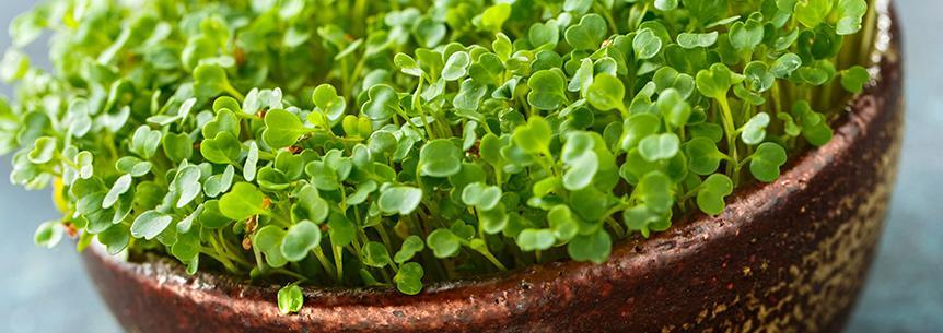 The Idiot's Guide to Microgreens!